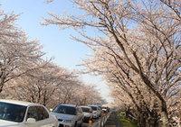 Kasamatsu0407_2