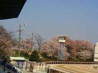 Kasamatsu0407_4